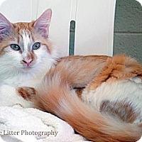 Adopt A Pet :: Louisa - Scottsdale, AZ