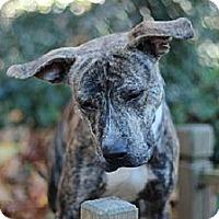 Adopt A Pet :: Vegas - Port Washington, NY