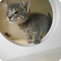 Adopt A Pet :: Meep - Maywood, NJ