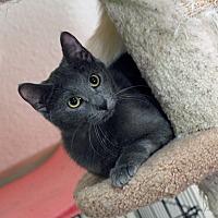 Adopt A Pet :: Hannah - St. Louis, MO