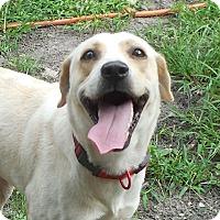 Adopt A Pet :: Kyla - Ormond Beach, FL