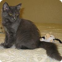 Adopt A Pet :: Nona - North Highlands, CA