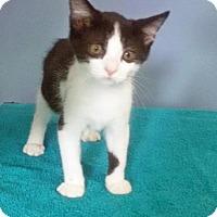 Adopt A Pet :: Lulu - McDonough, GA