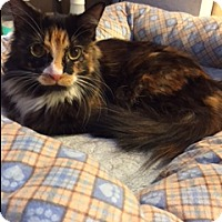 Domestic Mediumhair Cat for adoption in Brea, California - AUDREY