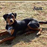 Doberman Pinscher/Black and Tan Coonhound Mix Dog for adoption in Lancaster, Kentucky - Sam