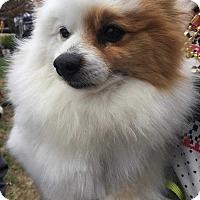 Adopt A Pet :: Frosty - Allen, TX