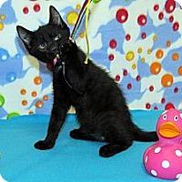 Adopt A Pet :: Handsome Jack - Orlando, FL