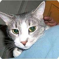 Adopt A Pet :: Grayce - New York, NY