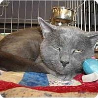 Adopt A Pet :: Aaron - Riverside, RI