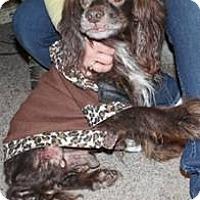 Adopt A Pet :: Romeo - Menomonee Falls, WI