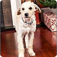 Adopt A Pet :: Louie - Owensboro, KY