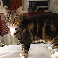 Adopt A Pet :: Tifa - San Jose, CA