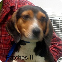 Adopt A Pet :: Patches - baltimore, MD