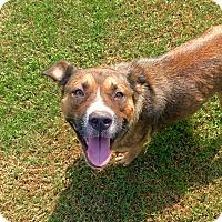 Adopt A Pet :: Katie - Fort Valley, GA