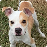 Adopt A Pet :: Marco - Hatifeld, PA