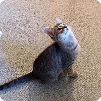 Adopt A Pet :: Peyton - McDonough, GA