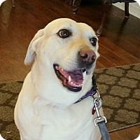 Adopt A Pet :: Millie - Coppell, TX