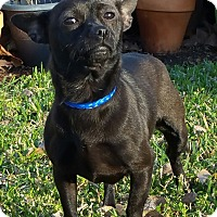 Adopt A Pet :: OPAL - Houston, TX