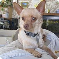 Adopt A Pet :: Tiny 2 Years - C/S & Denver Metro, CO
