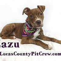 Adopt A Pet :: Zazu - Toledo, OH