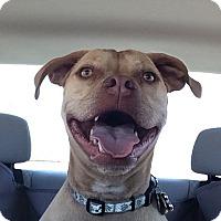 Adopt A Pet :: Lucy (aka Booger) - Oakley, CA