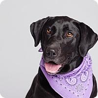 Adopt A Pet :: Sue - Ogden, UT
