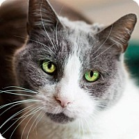 Adopt A Pet :: Sniffles - Naugatuck, CT