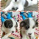 Adopt A Pet :: Bones