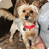 Adopt A Pet :: Rascal - Harrison, NY