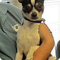 Adopt A Pet :: BUGSY - AUSTIN, TX