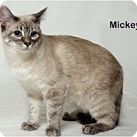 Adopt A Pet :: Mickey - Portland, OR