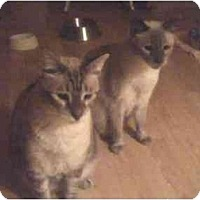 Adopt A Pet :: Miso and Soleil - Fort Lauderdale, FL