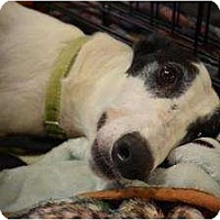 Adopt A Pet :: Bailey (OK Bailey) - Chagrin Falls, OH