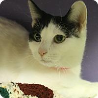 Adopt A Pet :: Katan - Medina, OH