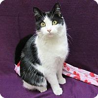 Adopt A Pet :: ITIM - Lexington, NC