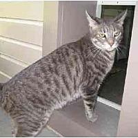Adopt A Pet :: Katherine - Agoura Hills, CA