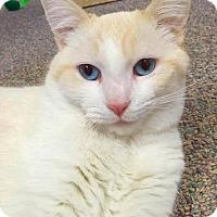 Adopt A Pet :: Carry - Smithtown, NY