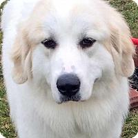 Adopt A Pet :: Zoey in NY - new! - Beacon, NY