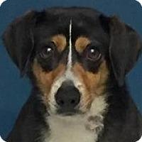 Adopt A Pet :: Jason - Springdale, AR