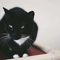 Adopt A Pet :: Cindy - Binghamton, NY