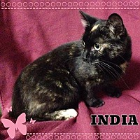 Adopt A Pet :: India - Buffalo, IN