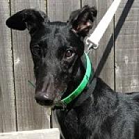 Adopt A Pet :: PG GRAND TORINO - Grandville, MI