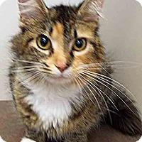 Adopt A Pet :: Heaven - Oswego, IL
