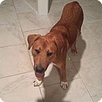 Adopt A Pet :: Brady - Kingwood, TX