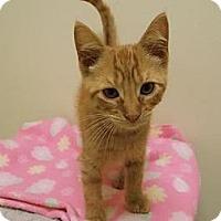 Adopt A Pet :: Killian - Norwich, NY