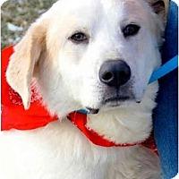 Adopt A Pet :: GATSBY - Wakefield, RI