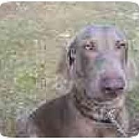 Adopt A Pet :: Duke - Eustis, FL