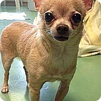 Adopt A Pet :: Sweet Pea - New York, NY