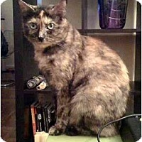 Adopt A Pet :: Kameko - Alexandria, VA