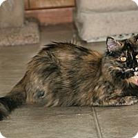 Adopt A Pet :: Bella - Grand Rapids, MI